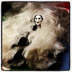 台北有點冷,但比利回到家覺得很溫暖。❤ (MaoPoPo & BiangBeiBei) Tags: dog square fur toy saw lofi vinyl pad schnauzer squareformat billy figurine 狗 小虎 公仔 毛 雪納瑞 奪魂鋸 iphoneography 比利 instagramapp uploaded:by=instagram