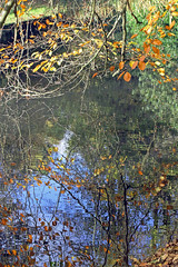 Autumn Reflections (TonyKRO) Tags: autumn fall nature water leaves reflections branches bluesky nationaltrust stowegardens reflectedsky goldenleaves