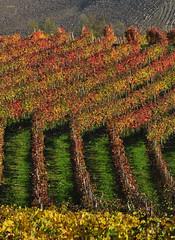 geometries colors (G.hostbuster (Gigi)) Tags: colors vineyards colori ghostbuster geometrie vigneti geometries gigi49