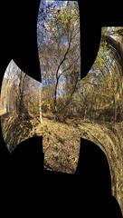IMG0555iPH5  Trees  © 2013 Paul Light (Paul Light) Tags: autumn trees autostitch lexington massachusetts minutemanbikeway