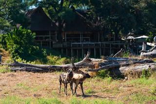 Botswana Okavango Delta Photo Safari 86