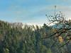 au dessus de MUNSTER  76  les VOSGES,  Beaute et Paysages de notre belle France, Guy Peinturier (GUY PEINTURIER) Tags: vairessurmarne beautedefrance guypeinturier bellefrance paysagesdefrance peinturierguy