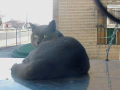 A stray tom, lounging on my air conditioner (Hairlover) Tags: pet cats cat kitten kitty kittens kitties kittys straycat straycats allcatsnopeople catcatskittykitties