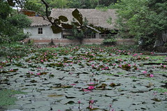 DSC_0311 (claudia.schillinger) Tags: chuathay vietnam teich pond lotus