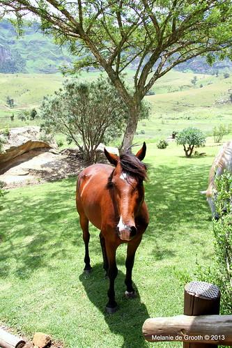 Horse at Drifters Drakensburg Lodge