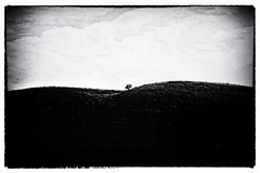 Loneliness (Cinzia Toscano) Tags: tree loneliness smooth hills