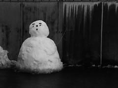 DSCN4101 (hinatahugu29) Tags: camera snow color nature monochrome japan nikon
