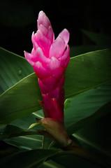 _14L5640 (5816OL) Tags: flowers dad oahu vacations hawaii2014
