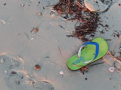 Asian Thong (mikecogh) Tags: seaweed asian lost sand thong left grange