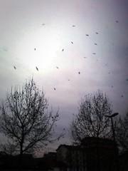 (Freckles Jam.) Tags: blue sky bird birds torino fly flying turin rees
