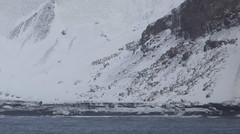 Penguins on Deception Island (mosesharold) Tags: antarctica deceptionisland celebrityinfinity southshetlandislands