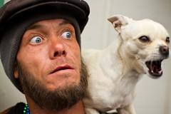 Stranger at Manitou Mardi Gras (RocketDog1170) Tags: dog chihuahua funny expression streetportrait stranger mardigras