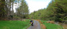 Forest tracking (beqi) Tags: panorama forest honda motorbike xrv750 photoshoppery 2014 africatwin lammermuir monynutforest