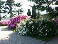 Lago Maggiore Isola Bella viali fioriti