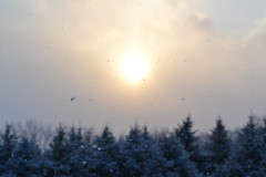 Swell (Autumn's Lull) Tags: trees winter light sun snow cold nature pine gold grey bright cloudy growing dust swell