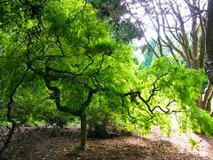 Tree in Green