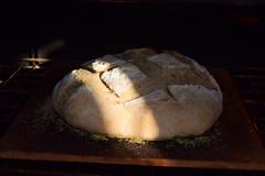 Madame Doz' Peasant Loaf (jjldickinson) Tags: food cooking dinner oven longbeach wrigley bakingstone nikond3300 promaster52mmdigitalhdprotectionfilter 100d3300 nikon1855mmf3556gvriiafsdxnikkor paindecampagnemadamedoz madamedozpeasantloaf