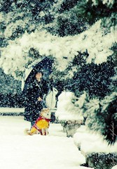 Kyoto Imperial Palace Place (ndyba_75) Tags: dog snow tree nature japan canon kyoto newyear   imperialpalace     winter
