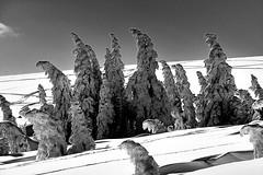 the icemen - die Eisheiligen* (claude05) Tags: winter bw snow blackforest feldberg explored baldenwegerbuck nolifts