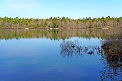 NS-00326 - Frog Pond (archer10 (Dennis) (74M Views)) Tags: park canada novascotia sony dingle free hike dennis jarvis iamcanadian mirrorless dinglepark freepicture 1650mm dennisjarvis a6300 sirflemmingpark archer10 dennisgjarvis ilce6300