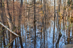 kaleidoscope (Qba from Poland / qmphotostudio) Tags: trees reflection nature water forest woods outdoor poland polska backwaters qba narew podlasie qbafrompoland qmphotostudio