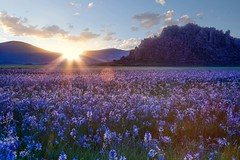 camas prairie-05-12-16-24 (Ken Folwell) Tags: flowers wow landscape idaho lilly camas canon5dii