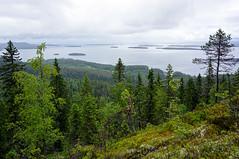 Koli - Finland (s.niemelainen) Tags: park nature forest suomi finland landscape north national maisema mets kansallispuisto luonto koli lieksa pohjoiskarjala carelia ukkokoli pielinen kansallismaisema sonya6000