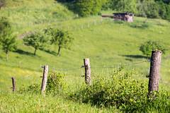 Zaun (hapequ1) Tags: natur wiese zaun