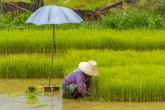 ChiangRai_7370 (JCS75) Tags: canon thailand asia asie chiangrai thailande