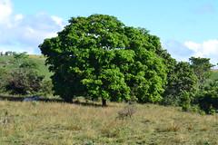 001-009 rvore (agnaldo.severo) Tags: verde folhas animal azul cu arvore nuvem