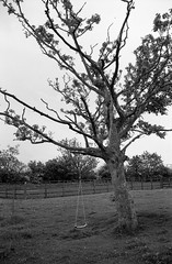The Swing (Man with Red Eyes) Tags: tree monochrome analog zeiss blackwhite rangefinder swing lancashire m6 leicam6 100iso homedeveloped adox silverhalide td201 silvermax anchelltroop a3minsb3mins continuousagitation distagont1435zm