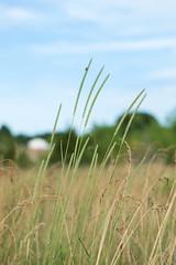 tall stalks @f/1.7 (severalsnakes) Tags: grass insect exercise pentax path walk trail missouri stinkbug sfcc ks2 sedalia statefaircommunitycollege shieldinsect vivitar5017 saraspaedy