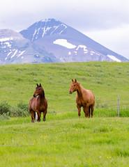 Roadside Horses (Jason The Owl) Tags: horses mountain albertacanada sigma150500mm nikond7000