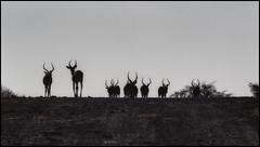 _SG_2016_05_Namibia_0014_IMG_1514 (_SG_) Tags: auto africa park trip tree water car nationalpark wasser solitude desert hole national afrika giraffe ausflug namibia herd baum strauch etosha watering wateringhole 2016 einde giraffen etoshanationalpark standpost wasserstelle etoshapark giraffenherde giraffesherd