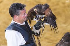 Halcones (anluca1) Tags: canon fiestas comiendo fotografa halcon 2016 cautividad tamron70200 arroyodelaencomienda eos7d angelcanales