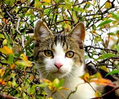 Curious Kitten (elliott.lani) Tags: cats pets animals outdoors kitten outdoor kitty lani allrightsreserved elliottlani lanielliott