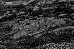 Ploughed (Paul T McDowell Photography) Tags: camera people blackandwhite nature field grass weather horizontal digital season lens landscape photography spring day bright image time unitedkingdom outdoor hiking decay year places glen manmade northernireland feeling agriculture orientation fineartphotography blackandwhitephotography 2016 countylondonderry canonef70200f28lisusm slievegallion landscapephotographer canoneos5dmarkii paultmcdowellphotography paultmcdowell