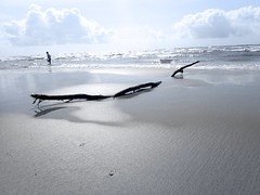 Driftwood {165/366} (therealjoeo) Tags: ocean sky surf texas gulf corpuschristi wave driftwood stick 365 padreisland 366 365project