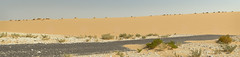 South Of Singing IX (Doha Sam) Tags: summer panorama digital sand nikon raw desert stitch dunes wilderness qatar hugin d80 southerndesert samagnew smashandgrabphotocom wwwsamagnewcom maketiff manualrawprocessing