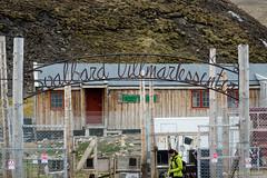 028-X3002283 (Roy Prasad) Tags: ocean sea dog mountain lake snow ice expedition nature norway canon sony glacier svalbard arctic fjord sled prasad spitsbergen iceburg longyearbyen dogsled rx10 5ds 1dx royprasad rx10m3 5dsr 1dxm2
