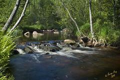 n som rinner nedanfr stugan. #1-1 (George The Photographer) Tags: juni se sweden natur  skog sten vatten vrmland fors ormbunke vattenfall kilsbergen rinner lilln lvtrd idylliskt kilen