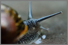 snail (Erik v Hassel) Tags: haps erikhaps nikon d5100 nederland holland dutch beautiful fraai excellent flickr view splendid beauty best wonderful fantastic awesome stunning incredible magic nice perfect photo image shot foto lovely slak pov snail