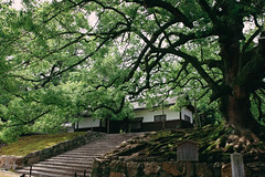 (DhkZ) Tags: temple kyoto japan tree treebranches tranquil canon10d canon1740mmf4l