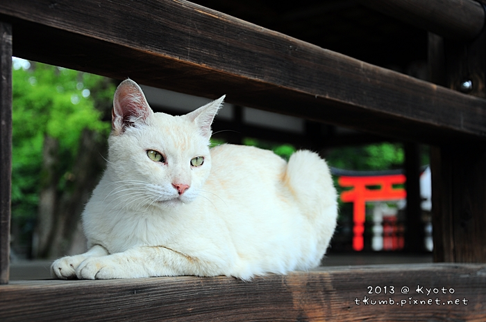 2013藤森神社11.jpg