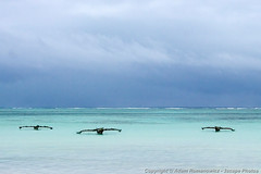 Boats and an approaching storm (3scapePhotos) Tags: africa tanzania approaching beach beaches boat boats canoe continent dhow island ocean outrigger safari storm tropical water weather zanzibar