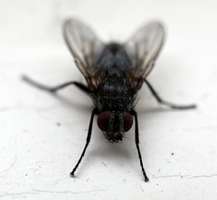 fly (Barrytaxi) Tags: outdoor photoblog photoaday 365