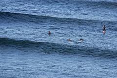 Line Up (iansand) Tags: surf surfer wave longreef utata:project=tw531