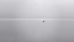 Life (kevinkishore) Tags: pelican bird light morning sunrise black white life wildlife lake water waterfront minimal reflection outdoor urban city chennai chengalpattu kolavai