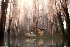Guardians of the forest II.  . (gusdiaz) Tags: photoshop photomanipulation digital art wolf wolves lobo lobos bosque spring primavera foliage trees reflecion pond water lillies lilies reflejo lago arboles naturaleza plantas