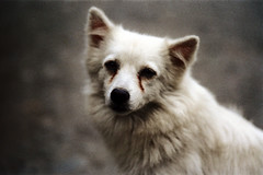 32-189 (ndpa / s. lundeen, archivist) Tags: winter dog color fall film animal 35mm village nick taiwan 1970s 1972 hualien 32 taiwanese eastcoast unidentified dewolf rurallife republicofchina easterncoast easterntaiwan nickdewolf photographbynickdewolf hualiencounty reel32